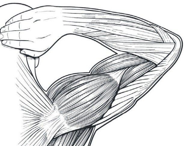 anatomy-illustrated