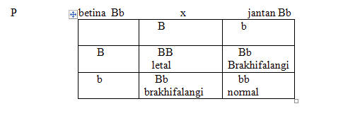 Brakhifalangi