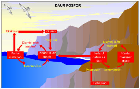 daur-fosfor