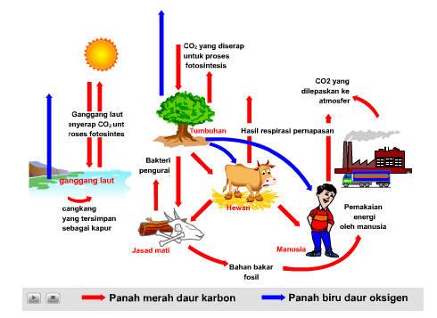 daur-karbon