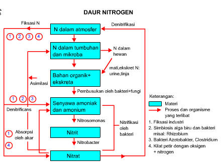 daur-nitrogen