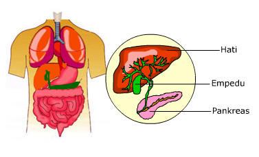 5 Fungsi Paru-paru Manusia dan Asupan Makanan Untuk Menjaga Tetap Sehat