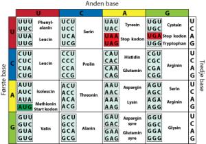 kode-genetika